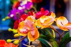Orchid flower, colorful orchid royalty free stock photography