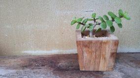 Orchid flower decor in garden. Park design outdoor art wood foor wood design Stock Images