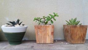 Orchid flower decor in garden. Park wood texture wood foor design outdoor close up Stock Image