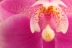 Orchid flower, detail Stock Photo