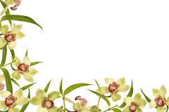 Orchid flower frame. And green leaves, spring time Royalty Free Stock Image