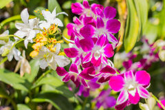 Orchid. In the flower garden Royalty Free Stock Photos