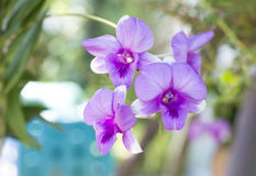 Orchid flower. In a garden background Royalty Free Stock Photography