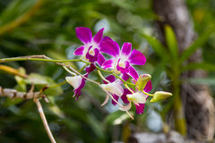 Orchid flower in the garden , nature background or wallpaper Stock Image