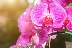 Orchid flower in the garden at winter or spring day. Stock Photos