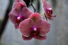 Orchid flower in garden at winter or spring day for postcard beauty and agriculture idea concept design. Phalaenopsis orchid. Orchid flower in the garden on a stock image