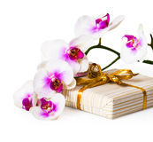 Orchid flower and gift box. Stock Images