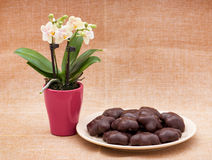 Orchid flower and gingerbread cookies Stock Photography