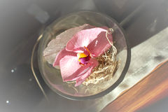 Orchid flower in glass bowl Stock Photo