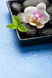 Orchid flower, green leaves and spa stones on wet blue backgroun Royalty Free Stock Image