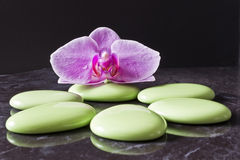 Orchid flower. On green pebbles Stock Photos