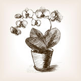 Orchid flower hand drawn sketch style vector Royalty Free Stock Photos