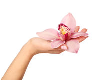 Orchid flower in hand isolated Stock Photography
