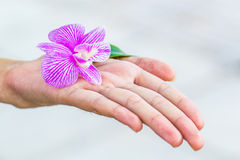 Orchid flower in hand. White and purple Orchid flower with leaf in women Royalty Free Stock Images