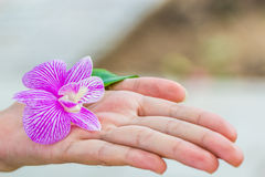 Orchid flower in hand. White and purple Orchid flower with leaf in women Stock Images