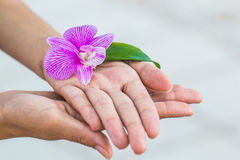 Orchid flower in hand. White and purple Orchid flower with leaf in women Royalty Free Stock Photos