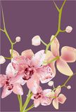 Orchid Flower,  illustration nature tropic romantic vector illustration