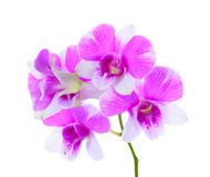 Orchid flower isolated stock photos