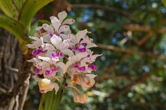 Orchid flower with the leaf. The white and violet orchid flower with the leaf under sunlight Stock Photos
