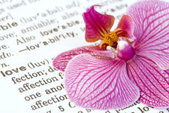 Orchid flower on love Royalty Free Stock Image