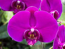 Orchid flower Macro Vivid color Royalty Free Stock Image