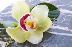 Orchid flower on marble Royalty Free Stock Image
