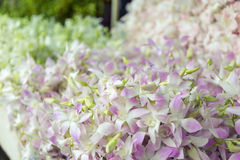 Orchid in flower markets. Very beautiful Royalty Free Stock Image