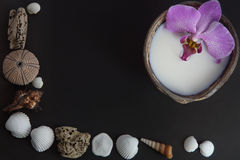 Orchid flower in milk in a coconut on a dark background, preparation for a spa treatment, shells and sea urchins on a dark backgro Royalty Free Stock Photography