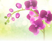 Orchid flower on nature blur background Royalty Free Stock Photos