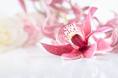 Orchid flower on neutral floral background Royalty Free Stock Images