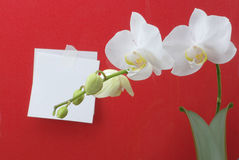 Orchid flower and note paper Stock Images