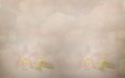 Orchid flower on old paper background Royalty Free Stock Photography