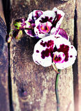 Orchid flower on old vintage wooden background Stock Photos
