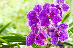 Orchid flower in orchid garden at winter or spring day. Orchid flower in orchid garden at winter or spring day for postcard beauty and agriculture idea concept Stock Photo