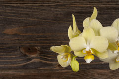 Orchid flower over wooden background. Stock Images