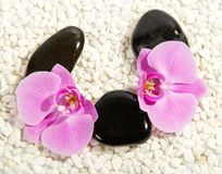 Orchid flower and pebbles Stock Images