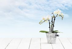 Orchid flower plant in pot metal bucket on wooden white table and sky background, web banner florist shop or gift card. Present concept stock photos
