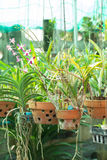 Orchid flower pots on a plant nursery Stock Photo