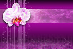 Orchid flower - purple digital computing design. White orchid flower on violet, purple artistic digital background design. Represents intersection of technology Stock Photography