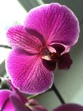 Orchid. Flower purple nature beauty Royalty Free Stock Image