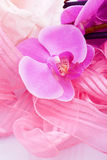 orchid flower with ribbon decoration Stock Images