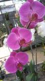 Orchid_FLOWER_ROMANCE_02 photographie stock