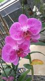 Orchid_FLOWER_ROMANCE_01 images stock
