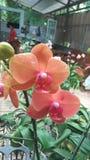 Orchid_FLOWER_ROMANCE_04 images libres de droits