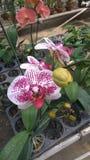Orchid_FLOWER_ROMANCE_05 photos stock