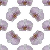 Orchid flower seamless pattern Royalty Free Stock Photo