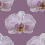 Orchid flower seamless pattern Stock Photography