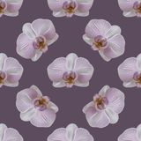 Orchid flower seamless pattern Royalty Free Stock Photography