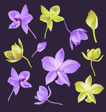 Orchid flower set Stock Image
