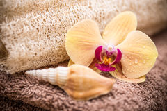 Orchid flower with shell Stock Photo